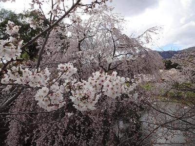 上田城千本桜祭2013