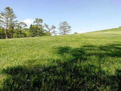 川中島古戦場史跡公園の芝生エリア