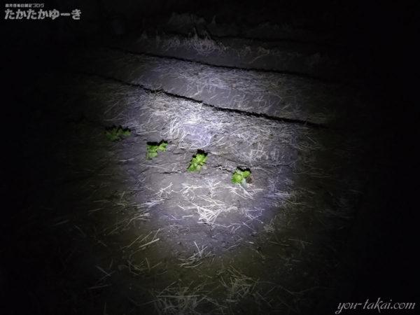 日本製モバイルバッテリーについているライトを夜の畑に向けてみた